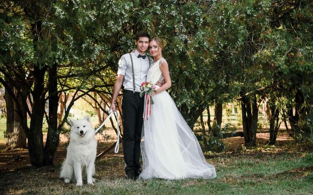 """Нестандартные свадебные фотосессии с животными!!!! - фото 11973998 """"Сто зверей"""" - агентство дрессированных животных"""