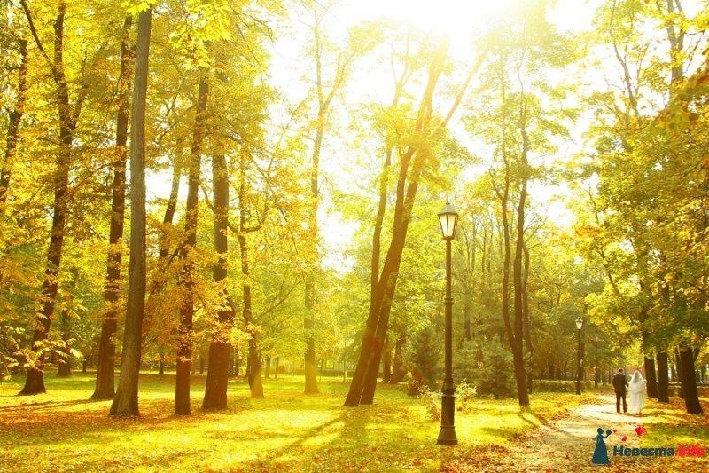Фото 470722 в коллекции Мои фотографии - Щегельская Галина фотограф