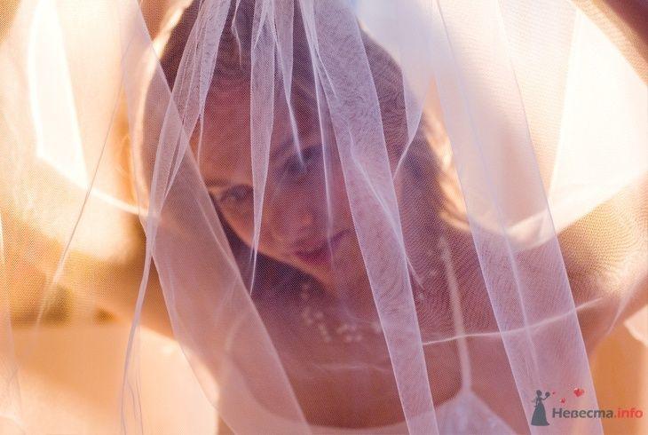 Фото 43902 в коллекции свадьбы - Фотограф Евгения Шимановская