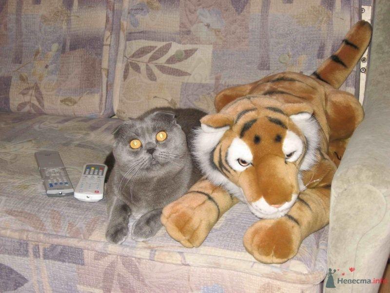 Фото 46819 в коллекции Мои фотографии - Tigra.