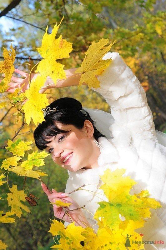 Фото 48251 в коллекции Мои фотографии - Евгения2009
