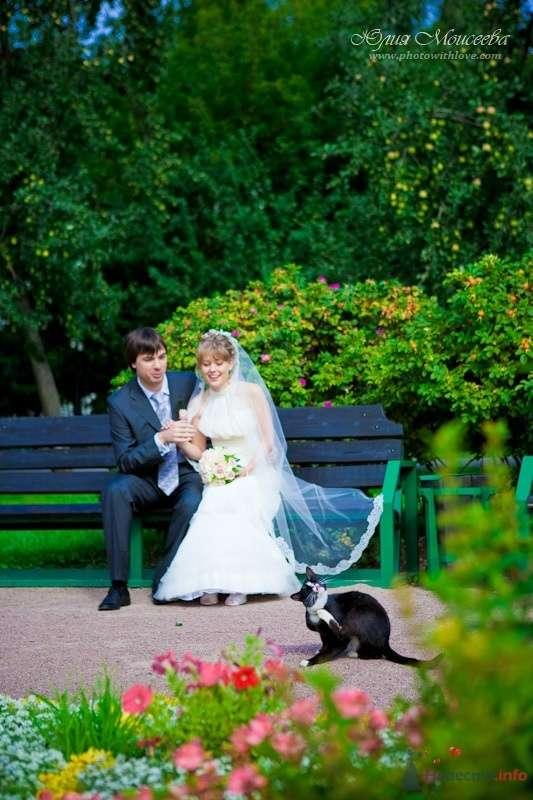 кошка на свадьбе - фото 62596 Свадебный фотограф Моисеева Юлия