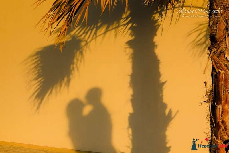 Свадебные церемонии - фото 94179 Свадебный фотограф Моисеева Юлия
