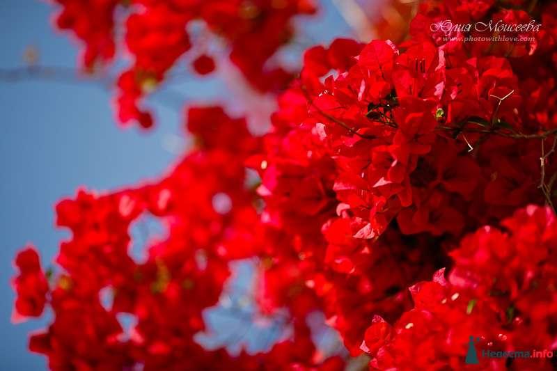 Весна на Кипре - фото 95804 Свадебный фотограф Моисеева Юлия