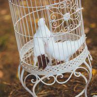 Отец жениха разводит породистых голубей. Парочка из них присутствовала на свадьбе. Этих птиц не выпускали, они были приближенными жениха и невесты в момент регистрации