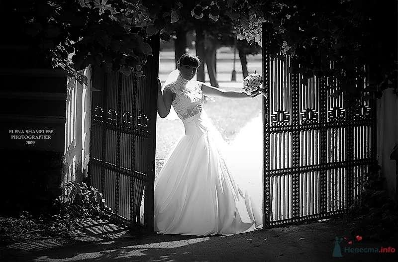 Фото 38438 в коллекции Свадебные фото - shameless