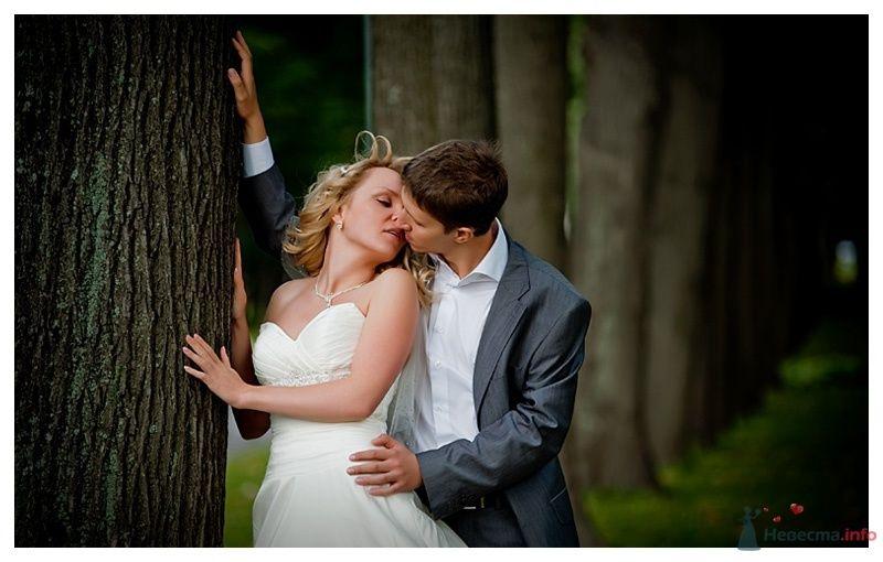 Жених и невеста целуются возле дерева в парке - фото 39878 Gennadiy