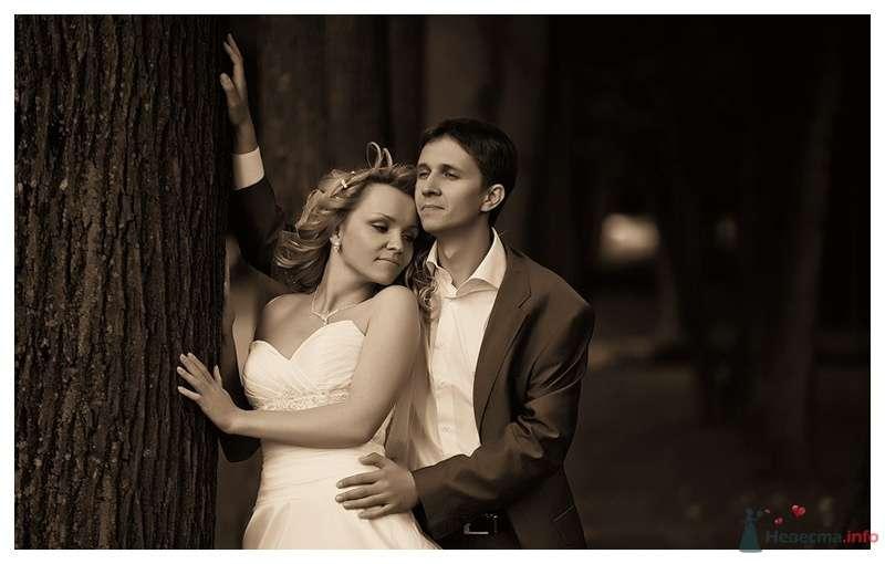 Жених и невеста стоят, прислонившись друг к другу, возле дерева в парке - фото 39881 Gennadiy