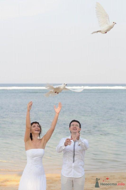 летите, летите.. - фото 58573 po4emu4ka
