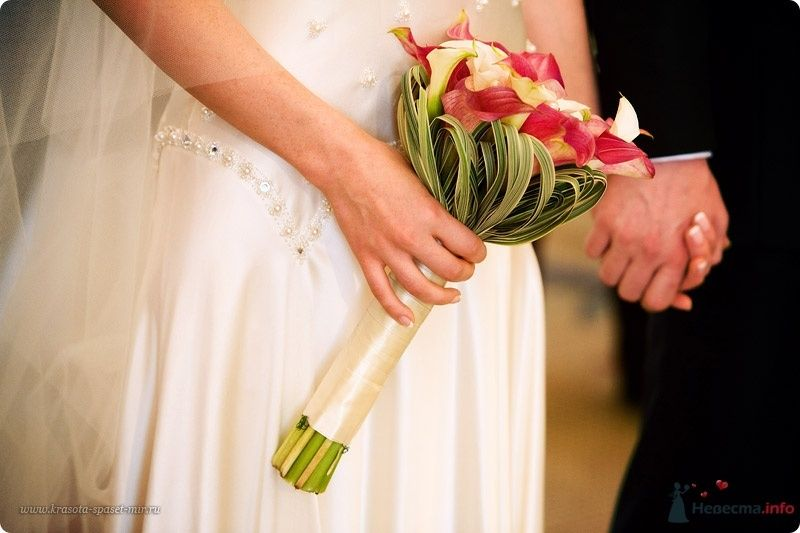 Букет невесты из белых и бордово-красных калл, зеленого тифа, декорированный белой атласной лентой  - фото 57369 Catherin