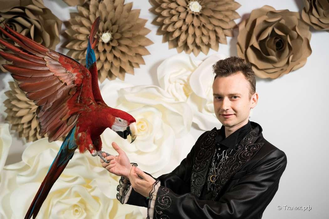 Фото 16258956 в коллекции Иллюзионист Роман Ахмедшин - Иллюзионист Роман Ахмедшин