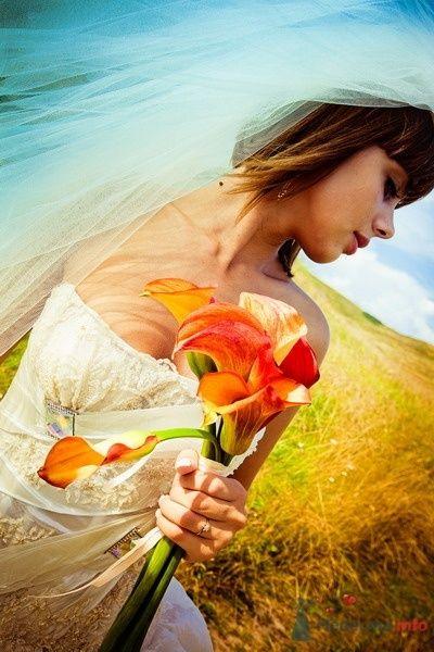 Фото 62133 в коллекции Моя оранжевая свадьба - yanechka