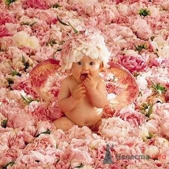 Фото 75358 в коллекции Мои фотографии - вишневая