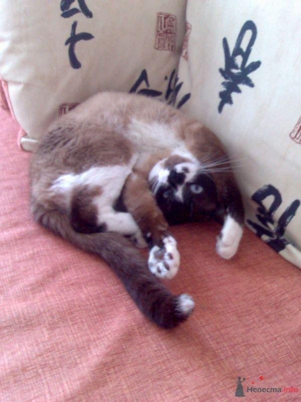 Коша Хвост - фото 46735 Симба