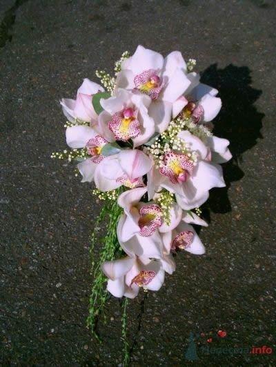Орхидея - фото 47090 Симба