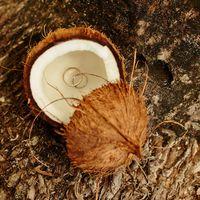 Экзотическая подставка-кокос для колец