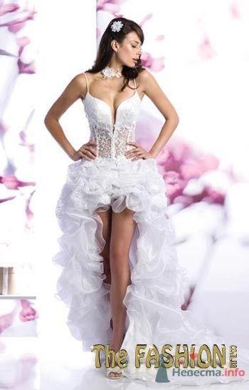 Фото 56260 в коллекции мои фотографии - Свадебный распорядитель Ольга Фокс