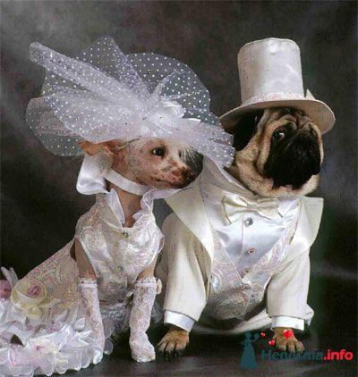 Фото 82031 в коллекции мои фотографии - Свадебный распорядитель Ольга Фокс