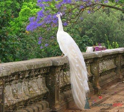 Фото 67029 в коллекции Птицы - вечные невесты