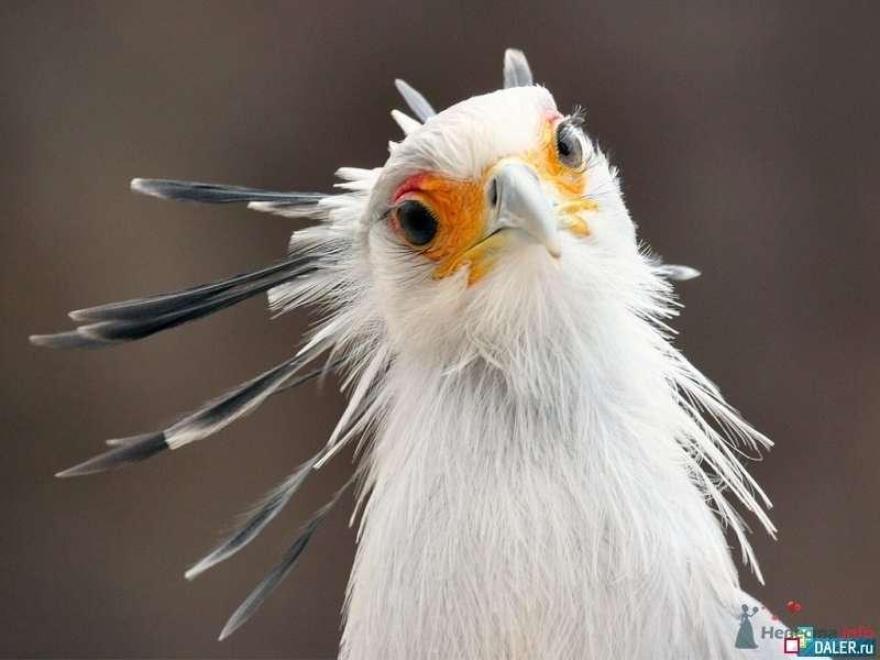 Фото 69479 в коллекции Птицы - вечные невесты - Incognito