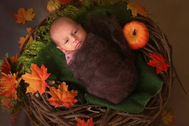 Фотосессия новорождённых, 1 час
