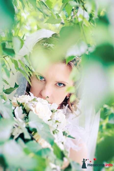 Фото 102568 - Невеста01