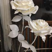 Ростовые цветы в белом цвете