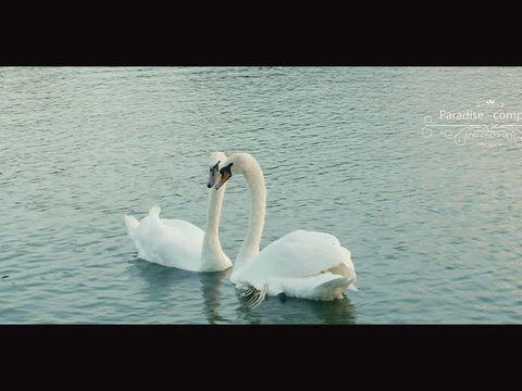 Trailer Dmitry & Olga